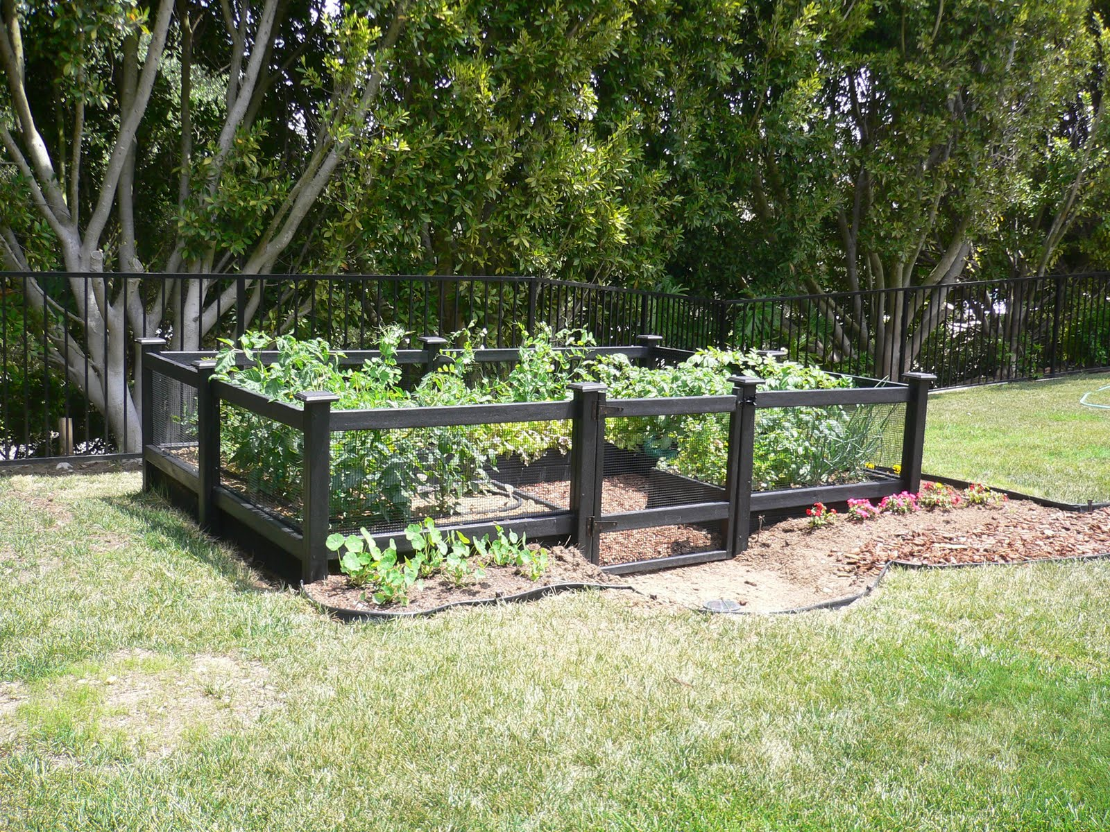 Chain link fence enclose vegetable garden fences for Veggie garden designs